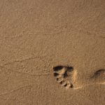 10 ways to reduce ecological footprints